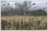 Рибки в небето ; comments:143