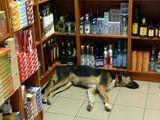 цигари, алкохол ... не е лесно ; comments:4