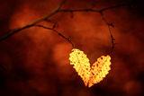 Есенно сърце ; comments:23