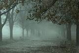мъгливо утро ; comments:32