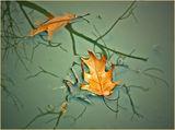 """""""Есенният сън на листата"""" ; comments:30"""