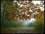 Есенна мъгла ; comments:61