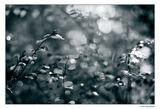 ...cold emotion... ; comments:14