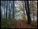 Мъгла ; comments:89