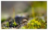 ...малко късче от природата на Мелник... ; Коментари:21