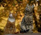 есенни котки 1 ; comments:40