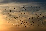 Птиците ; comments:13