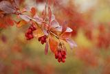 Есенни импресии ; comments:23