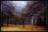 Есенна картина ; comments:44