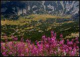 Рила в цветя ; comments:52