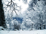 Winter Wonderland ; comments:25