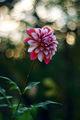 Есенни цветя ; comments:47