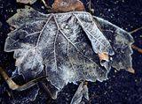 есен - №4 ; comments:5