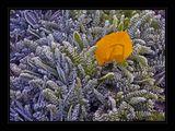 fozen colours ; comments:41