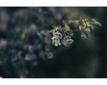 blue.flowers ; comments:19
