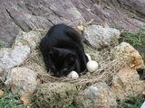 Котка мъти котенца:)) ; comments:10