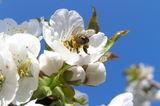 Спомени в очакване на пролет ; comments:4