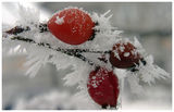 """A. Vivaldi - """"Le quattro stagioni"""" Concerto No. 4 in F minor, Op. 8, RV 297, """"L'inverno"""" 1. Allegro non molto ; comments:19"""