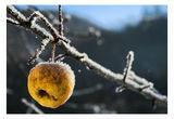 зимата на една ябълка ; comments:18