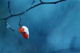 накъде без шипки през зимата :) ; comments:23