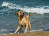 Плажни игрички:) ; comments:62