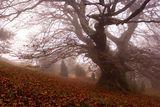 дървото на .... ; comments:28