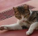 Мацето от горния етаж ...:) ; comments:14