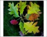 Дърветата сънуват есента ; comments:31