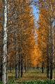 Есенно ; comments:34