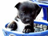куче в чекмедже :) ; comments:10