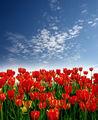 Пролет ; comments:50