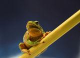 влюбен в едно съседно жабче:-) ; comments:127