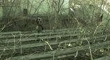''Изоставено лятно кино''... обитавано от феи, върколаци и заблудени фотографи. ; Comments:3
