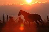 Силуети по изгрев слънце ; Comments:6