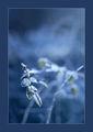 Зимно настроение ; comments:31