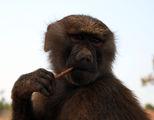 Maimuna iade soleta ; comments:4