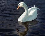 Ще плуваш някога  в сълзите си ...... ; comments:51