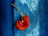 Blue Hot Chili Pepper ; comments:31