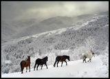 репост на коне край с.Орешец ; comments:70
