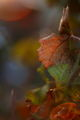 Есенни багри ; comments:47