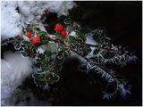 Градинка, скреж и сняг ; comments:23