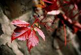 носталгия по есента ; comments:9