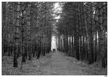 Разходка в парка ; comments:27
