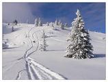 Зима ; comments:49