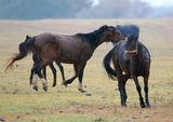 Един мокър дивеещ кон, два мокри дивеещи коня... ; comments:8