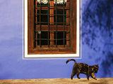 Натюрморт с котка 2 ; comments:48