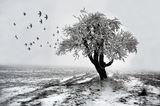 Зима ; Comments:45