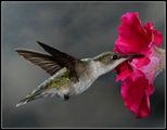 Колибри в полет 2 ; comments:38