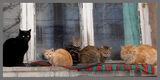 композиция с котки ; comments:11