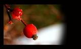 Marmalad ; Comments:6